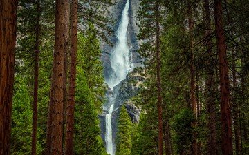 деревья, лес, фон, пейзаж, скала, водопад, поток, сосны