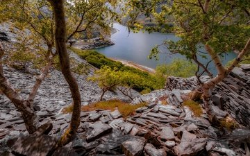 trees, lake, rocks, stones, wales, llyn peris