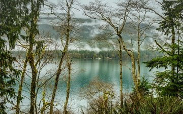 trees, lake, forest, fog, usa, olympic national park, lake crescent