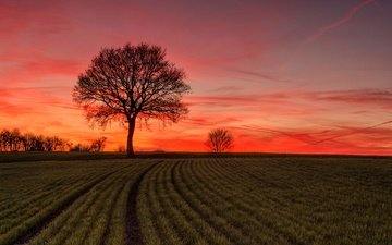 tree, sunset, landscape, field, glow