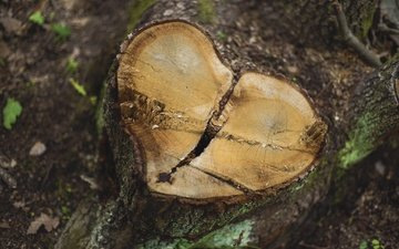 nature, tree, background, heart, stump