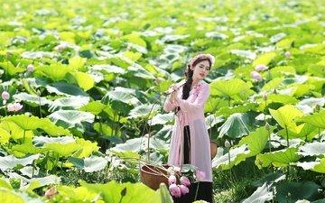 flowers, girl, brunette, summer, asian, lotus