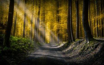 свет, дорога, деревья, природа, лес, листва, осень, солнечные лучи, просвет