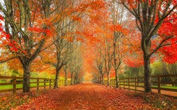 road, trees, leaves, autumn, washington, the fence, alley, snoqualmie