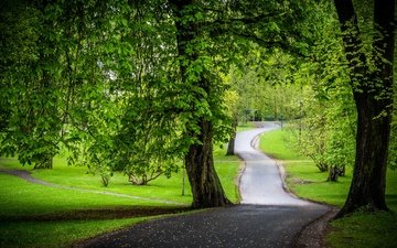 road, trees, greens, park, chestnuts
