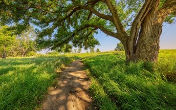 road, grass, tree, summer, path