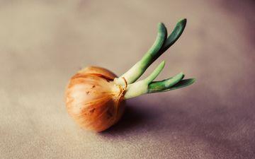 зелень, лук, макросъемка, овощи, крупным планом
