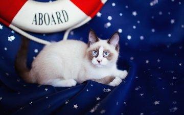 фон, кот, кошка, взгляд, котенок, лежит, ткань, мордашка, звездочки, рэгдолл, спасательный круг