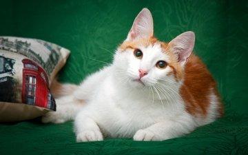фон, кот, кошка, взгляд, котенок, лежит, ткань, подушка, покрывало, желтые глаза