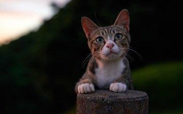 фон, кот, мордочка, усы, кошка, взгляд