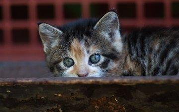 фон, кот, мордочка, доска, кошка, взгляд, котенок, маленький, малыш