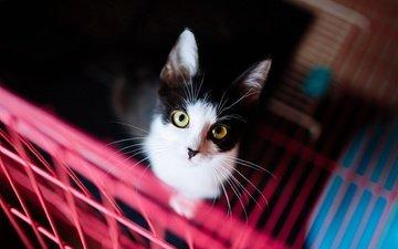 фон, портрет, кот, кошка, взгляд, котенок, решетка, темный, желтые глаза