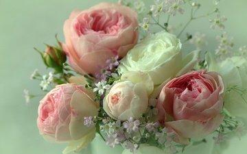 цветы, фон, розы, лепестки, букет, sonata zemgulienе