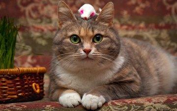 глаза, фон, кот, мордочка, усы, кошка, взгляд, игрушка, корзинка, мышка