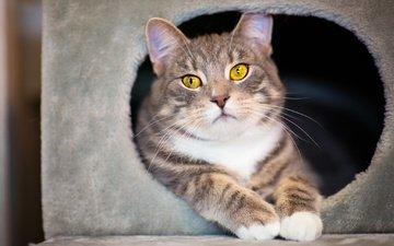 глаза, морда, кот, мордочка, усы, кошка, взгляд, домик, уют, полосатый