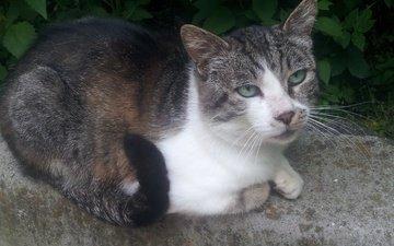 глаза, морда, листья, кот, мордочка, усы, кошка, взгляд