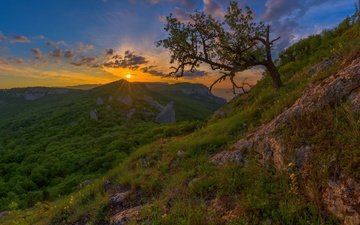 mountains, tree, forest, sunset, russia, crimea, the crimean mountains