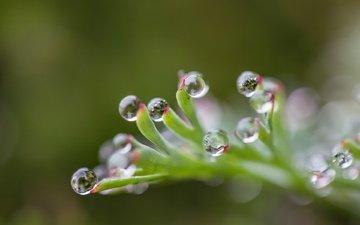 капли, блики, лист, размытость, растение