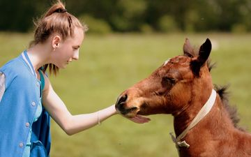 horse, nature, girl, mood, friendship, foal, contact