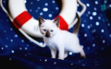 кошка, взгляд, котенок, ткань, мордашка, звездочки, голубые глаза, рэгдолл, спасательный круг