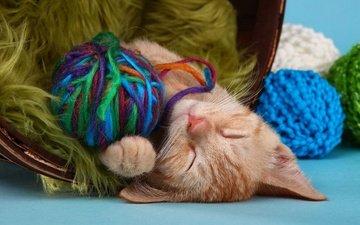 кот, кошка, сон, котенок, спит, рыжий, клубки, нитки, пряжа