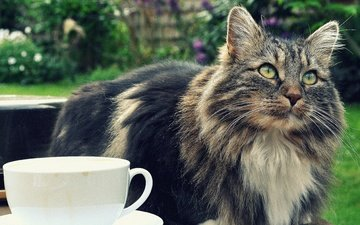 кот, мордочка, усы, кошка, взгляд, чашка