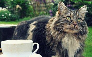 cat, muzzle, mustache, look, cup