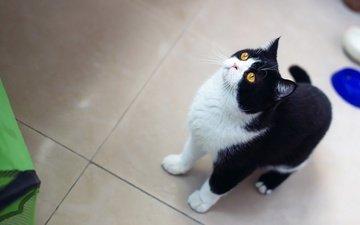 кот, кошка, взгляд, кухня, кафель, миски, желтые глаза
