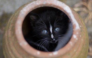 кот, мордочка, кошка, взгляд, котенок, маленький, игра, малыш, посуда, прятки, горшок, керамика