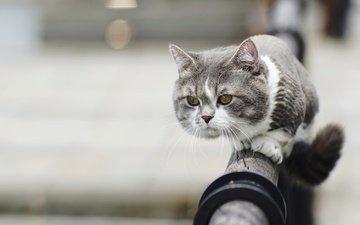 кот, мордочка, усы, кошка, взгляд