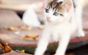 кот, мордочка, усы, кошка, взгляд, котенок, малыш, лапки