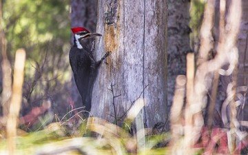 nature, tree, forest, bird, beak, woodpecker