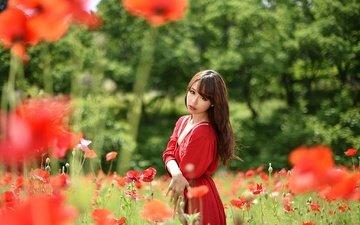 цветы, девушка, лето, взгляд, маки, модель, волосы, лицо, азиатка, красное платье