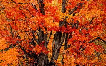 листик, окрас, опадают, осен, времена года, листья, осенние листья, дерево