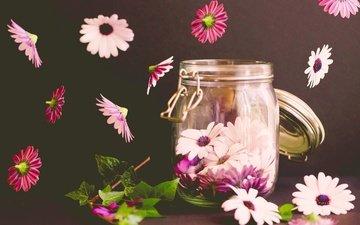 цветы, макро, фон, лепестки, банка, остеоспермум