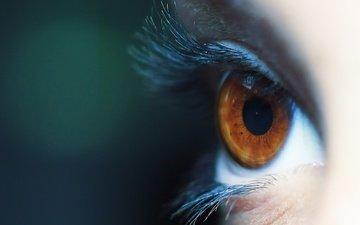 макро, фон, глаз, ресницы