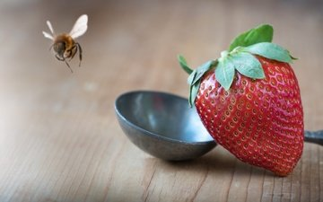 macro, insect, background, strawberry, table, berries, bee, ladle