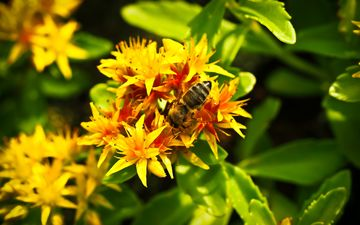 insect, flower, plant, macro, bee, yellow flowers