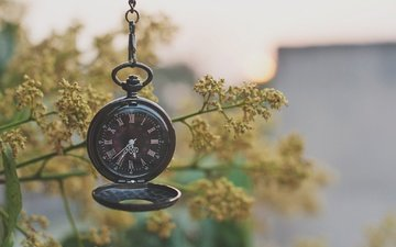 plants, macro, branches, watch, pocket watch