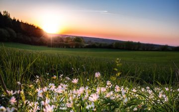 the sky, flowers, trees, the evening, the sun, mood, field, sunset, glow, daisy, romance, twilight
