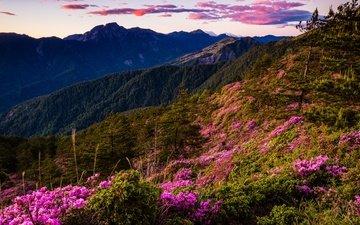 небо, цветы, облака, деревья, вечер, горы, холмы, природа, пейзаж, вид, кусты, склон, вершины, весна, ели, растительность, рододендроны
