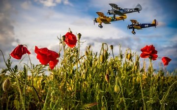 the sky, flowers, clouds, flight, field, summer, aviation, aircraft, maki