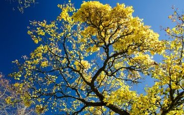 the sky, tree, leaves, branches, autumn