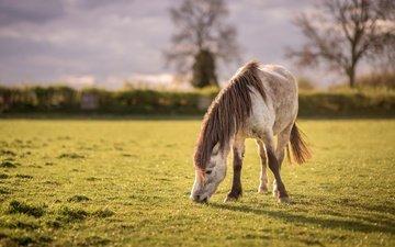небо, лошадь, трава, деревья, природа, лето, луг, пастбище, конь, лужайка