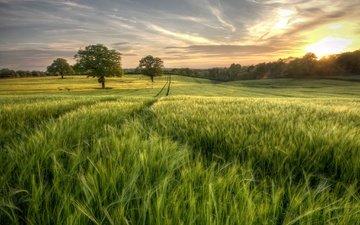 небо, трава, деревья, солнце, зелень, лес, поле, лето