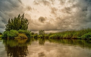 the sky, grass, trees, clouds, the bushes, pond, tropics, overcast