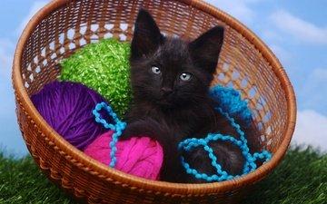 небо, трава, кот, кошка, котенок, маленький, клубок, голубые глаза, корзинка, клубки, нитки, пряжа