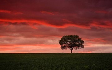 the sky, clouds, tree, sunset, field, horizon, glow