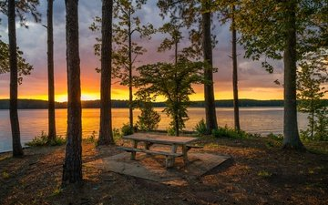 trees, lake, shore, forest, sunset, trunks, bench