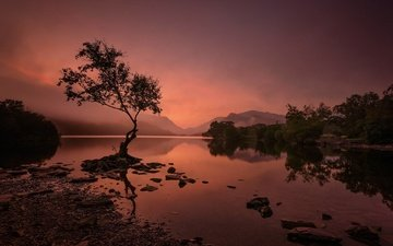 lake, mountains, tree, wales, snowdonia, llyn padarn